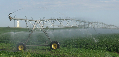 center pivot watering soybeans