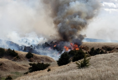 Pasture Controlled Burn